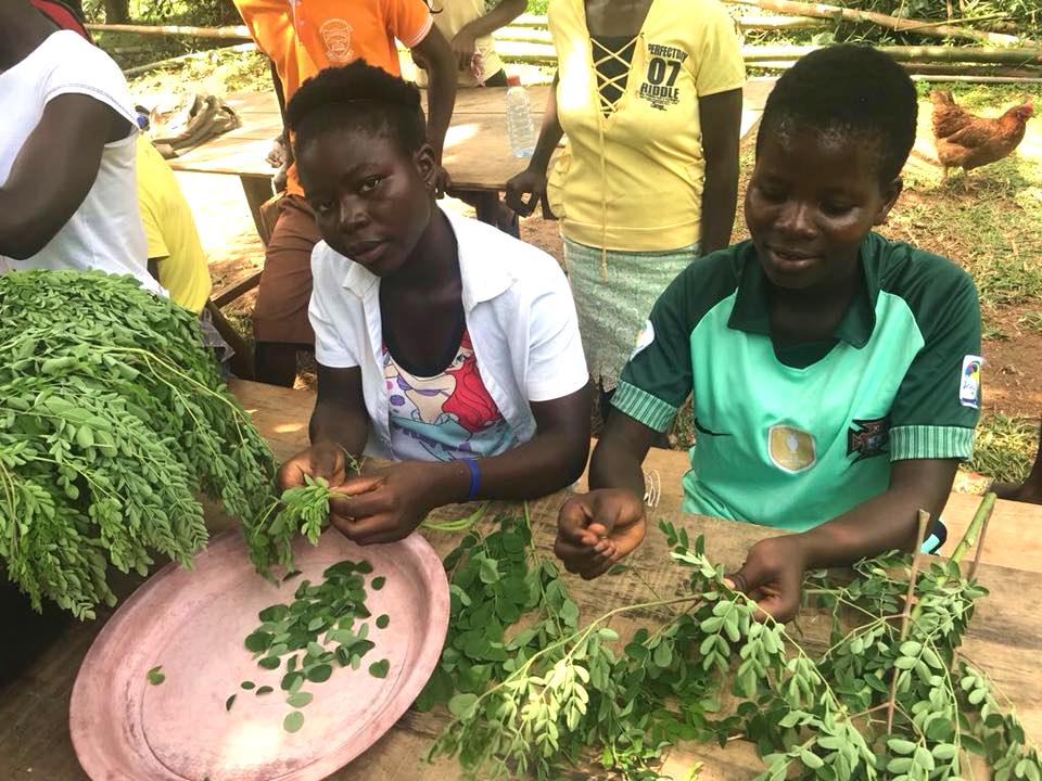 npo-africa-tys-neem-sustainability