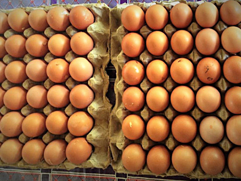 npo-africa-tys-chicken eggs