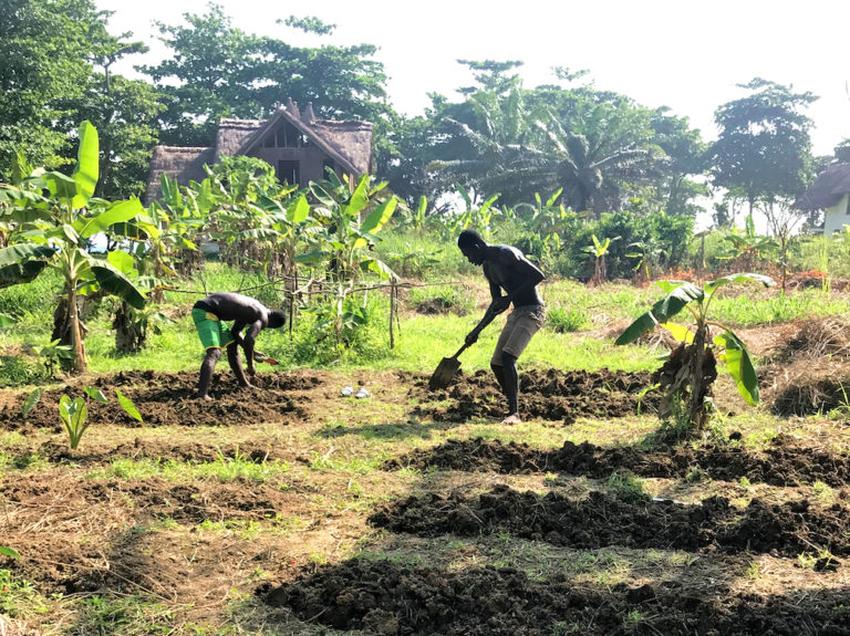npo-africa-tys-farm-garden-beds-earth