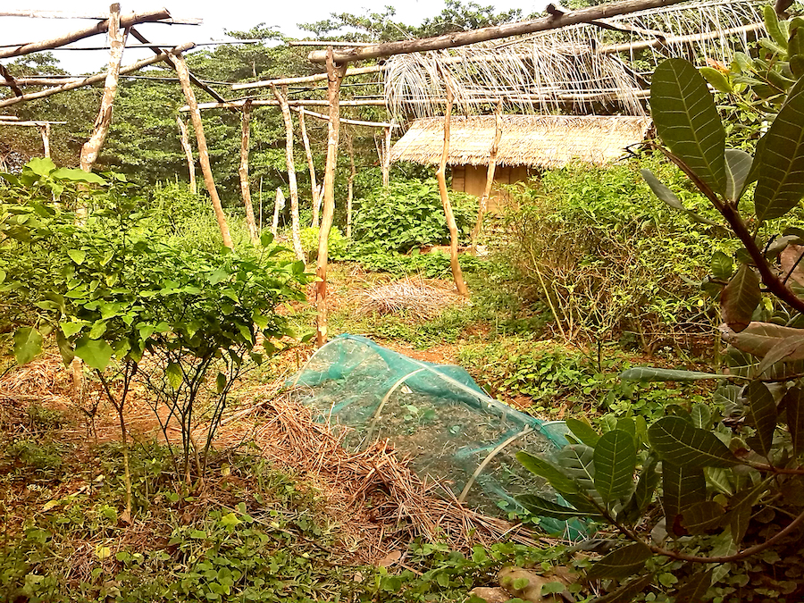 Sustainable Methods for a Tropical Climate