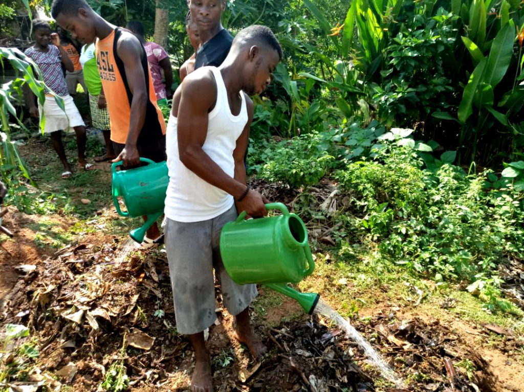 Sustainable Farming with Heavy Mulch and Rain Water