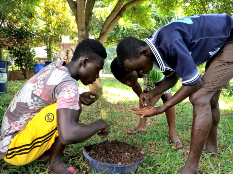 npo-africa-tys-seed-planting
